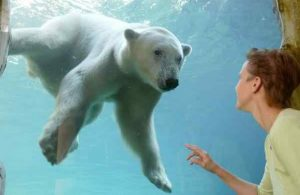 Zoo & Wildlife Farms