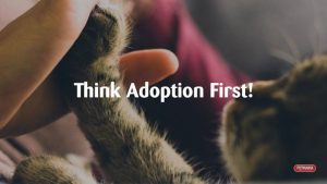 Adoption Day with KCADR